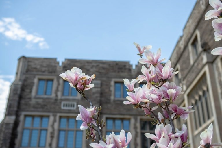 Flowers blooming at McMaster