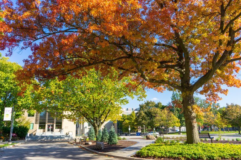 Trees on McMaster campus during fall
