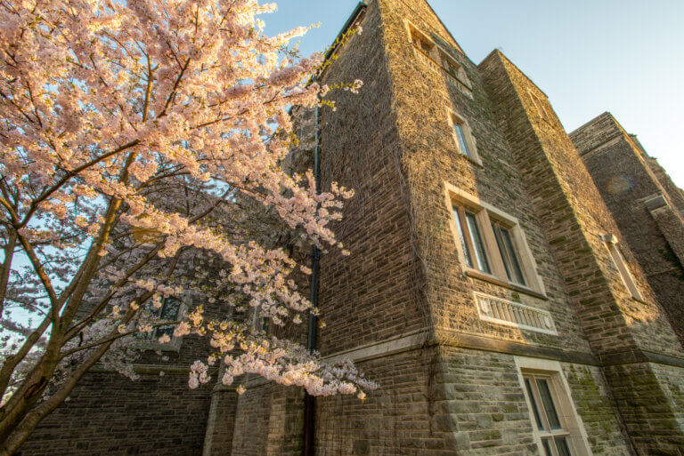 Behind Hamilton Hall scenery during Spring bloom 2020.